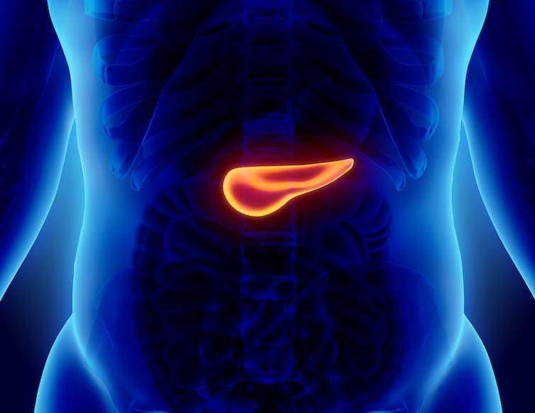 modalități de infecție cu viermi