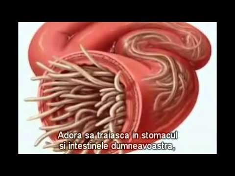 un medicament bun pentru viermii umani