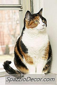 pisici giardia